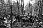 Окружающие деревья сломаны и обгорели, пожарные проливают горящие обломки (фото: Андрей Чаплыгин/РИА Новости)