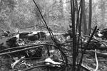 Место падения самолета – близ деревни Артемово Пушкинского района – сейчас оцеплено полицией (фото: Андрей Чаплыгин/РИА Новости)