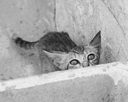 Протест против борьбы с бездомными животными – это безответственность (фото: Наталья Селиверстова/РИА Новости)