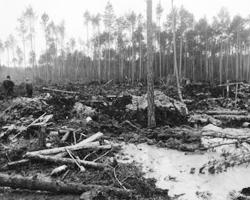 Местным жителям все равно, что гибнут леса и поля. Янтарь все окупает (фото: unn.com.ua)