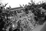 Санкт-Петербург. 12 июня 2017 г. Участница фестиваля цветов у Александринского театра на площади Островского (фото: Петр Ковалев/ТАСС)