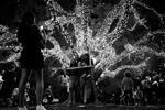 Женщина делает снимок семьи возле деревьев, украшенных рождественскими огнями, в парке Ибирапуэра в Сан-Паулу, Бразилия (фото: Nacho Doce TPX/Reuters)