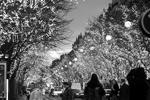 Авеню Монтань украшена рождественской иллюминацией во время курортного сезона в Париже, Франция (фото: Charles Platiau/Reuters)