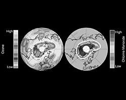 На левом рисунке изображен озоновый слой над Арктикой; на правом рисунке количество Оксида хлора, который уничтожает Озоновый слой(фото: nasa.gov; нажмите, чтобы увеличить)