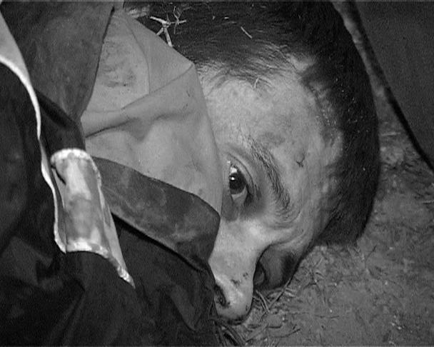 Полицейским удалось задержать устроившего стрельбу в центре Белгорода рецидивиста Сергея Помазуна. В момент задержания он пытался скрыться из области на товарном поезде. Помазун порезал ножом полицейского и заявил, что «стрелял в ад»