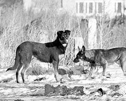 Если бы у каждого зверя был микрочип с информацией о хозяине, то за брошенную собаку можно было бы брать серьезный штраф (Фото: Владимир Саяпин/ТАСС)