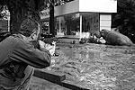 Часть сбежавших из зоопарка животных усыпили на близлежащих улицах и возвратили в зоопарк, других пришлось застрелить, так как они представляли угрозу для жизни людей (фото: Beso Gulashvili/Reuters)