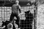По версии прокуратуры, более 28 зверей и птиц погибли «вследствие незаконного бездействия неустановленных лиц из числа сотрудников зоопарка» (фото: Юрий Смитюк/ТАСС)