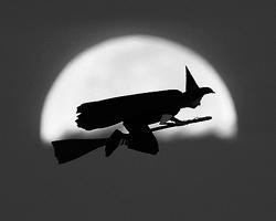 Призывы запретить Хеллоуин – это пиар (фото: Mike Blake/Reuters)