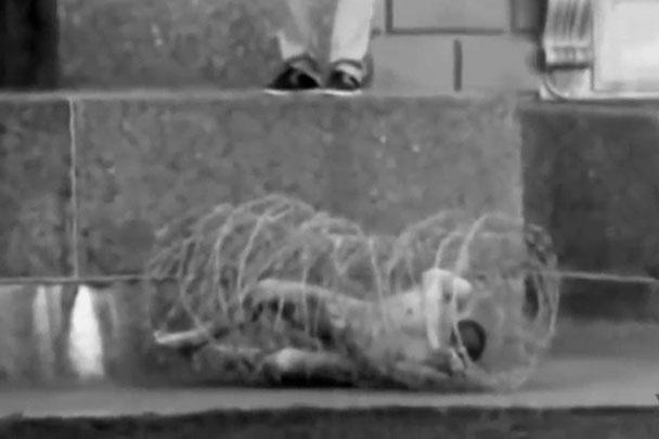 3 мая 2013 года Павленский в знак протеста против репрессивной политики властей провел акцию «Туша». Активисты принесли художника, завернутого в многослойный «кокон» из колючей проволоки, к зданию законодательного собрания Петербурга