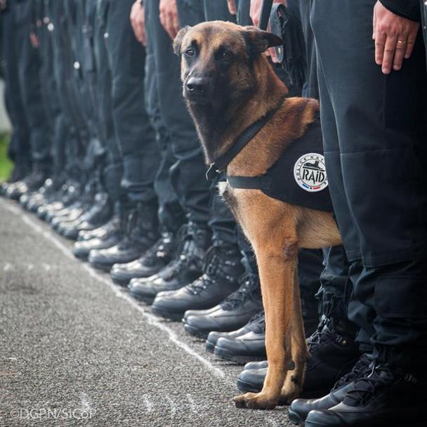 Московская полиция подарила щенка парижским коллегам