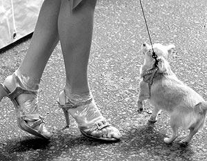 С нового года прогулка с собакой в Москве может обойтись владельцу  в 1 тыс. рублей