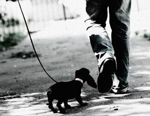 Автор статьи поэт Дмитрий Водеников тоже завел собаку