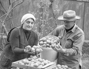 В ближайшее время запрет на ввоз в Россию растениеводческой продукции из Грузии снят не будет