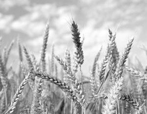 Россия располагает огромным потенциалом для производства сельскохозяйственной продукции