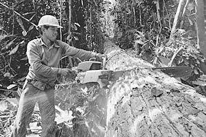 Особую осторожность на работе следует проявлять лесорубам