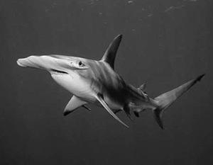 В Египте пьяный турист случайно убил акулу