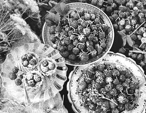 Названы ягоды, замедляющие старение мозга
