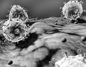 В ходе экспериментов с зараженными «испанкой» мышами исследователи обнаружили, что вирус провоцировал мощнейшую реакцию иммунной системы