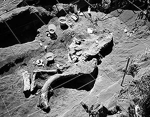 Остатки уникальных существ возрастом 350 млн лет нашли в Сибири