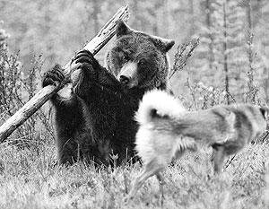 Русский медведь не позволит сделать из себя чучело