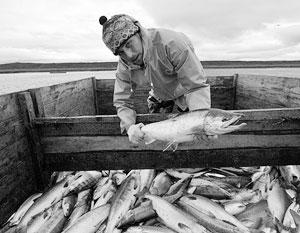 Рыбаки Сахалина критикуют запрет на вылов дрифтерными сетями лосося в особой экономической зоне РФ
