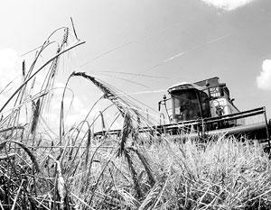 Россия догоняет США на мировом рынке пшеницы