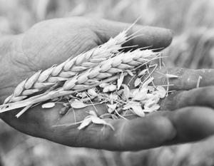 Новым перспективным рынком для российской пшеницы может стать Китай