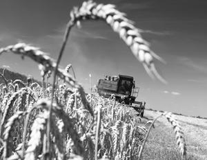 Россия ждет нового рекордного урожая зерна, вдвое большего, чем у Украины