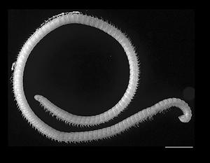 В США найдено существо с рекордным числом ног