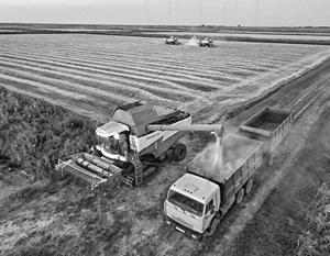 Предыдущий год оказался для российского сельского хозяйства исключительно удачным