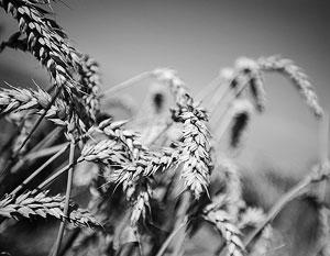 Качество хлеба вырастет вслед за ростом платежеспосности населения