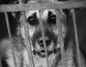 В Общественной палате призвали Генпрокуратуру вмешаться и остановить травлю бездомных собак на Кавказе