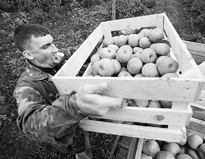 Экономика: С заявлениями о «полном импортозамещении» яблок власти явно поторопились