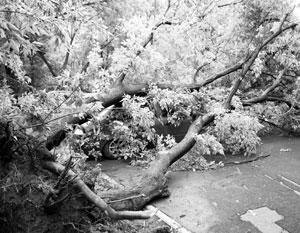 МЧС: Последствия урагана в Москве ликвидируют более 1 тыс. человек