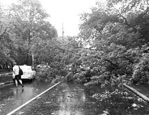 Число жертв урагана в Москве и области достигло 16 человек