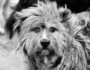 Самой гуманной работой с бездомными животными считается система отлова, лечения, стерилизации. После этих процедур их отпускают
