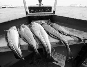 Мясо птицы сложно продать на экспорт, а выловленную в России рыбу – легко и проще