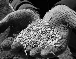 Украина за пять дней исчерпала годовые квоты на экспорт пшеницы и кукурузы в ЕС