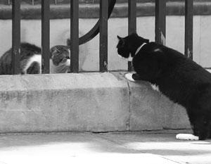 В Сети нашли политический подтекст в драке двух главных котов