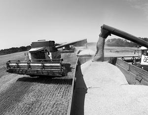 Российская пшеница выигрывает жесткую конкуренцию с ЕС, США и Австралией