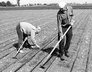 Киев поставил себе в заслугу засуху и засоление почв в Крыму