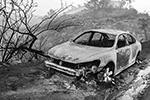 Последствия пожара в Калифорнии (фото: September Dawn Bottoms/Zuma/Global Look Press)