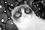 Грампи Кэт - самая сердитая кошка интернета и героиня многочисленных мемов, умерла 14 мая на руках у своей хозяйки в возрасте 7 лет. Причиной смерти стала инфекция мочевого пузыря. Настоящая кличка кошки - Соус Тардар (фото: instagram.com/realgrumpycat)