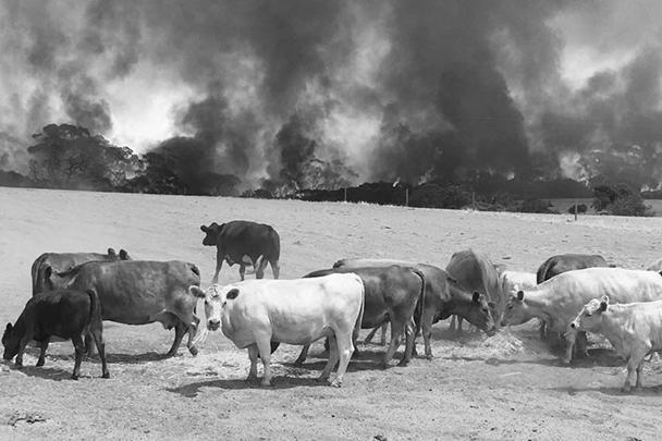 Всемирный фонд дикой природы оценил число погибших животных в 1,2 миллиарда особей – среди них и млекопитающие, и птицы, и рептилии