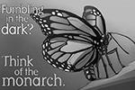 Вырубка лесов в местах зимовки бабочки монарха привела к резкому сокращению его численности. Монарх является охраняемым видом (фото: The Center for Biological Diversity Art/Shawn DiCriscio)