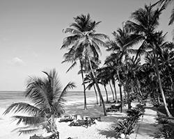 Белоснежные пляжи Занзибара (фото: Martin Moxter/Image BROKER/Global Look Press)
