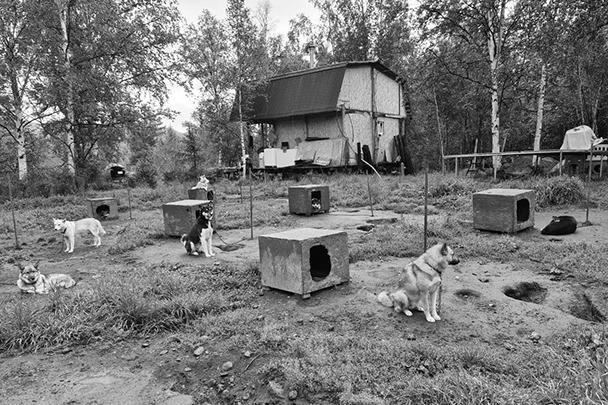 Питомник ездовых собак. Село Эссо, Камчатский край