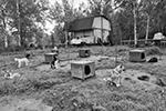 Питомник ездовых собак. Село Эссо, Камчатский край(фото: Юрий Васильев/ВЗГЛЯД)