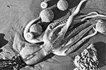На Камчатке выясняют причины массовой гибели морских животных на тихоокеанских пляжах Авачинского залива. Предварительные исследования выявили превышение содержания в прибрежной зоне фенола и нефтепродуктов. Однако экологи сомневаются, что именно это стало причиной гибели тысяч животных (фото: Анна Стрельченко/ТАСС)